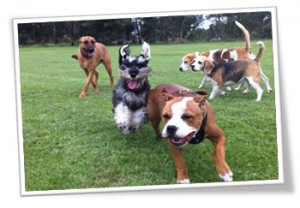 Group dog walking service to Ascot Vale, Melbourne