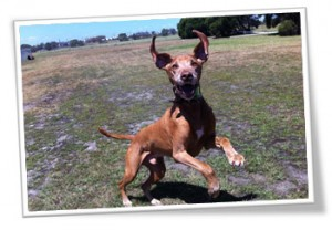 Dog walking trips to Williamstown, Melbourne,
